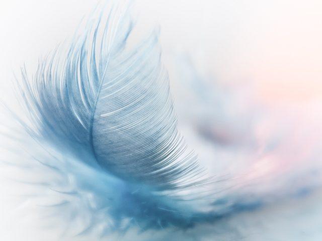 poids plume